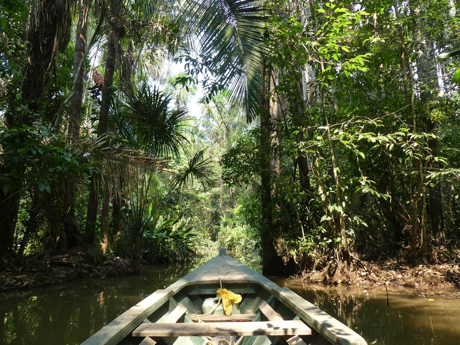 Amazonie bateau foret