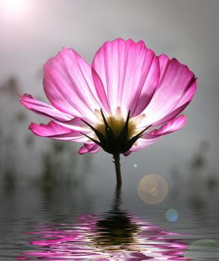 Fleur nectar